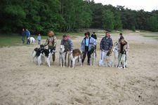 Dog's paradise inn - Thoricourt - Club belge du Borzoï