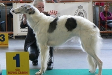 Dog's Paradise Inn - Thoricourt - Elevage de Borzoï