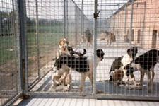 Dog's Paradise Inn - Thoricourt - Galerie photos