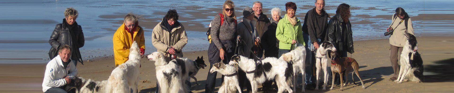 Dog's Paradise Inn - Pension pour chiens