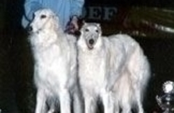 Dog's Paradise Inn - Elevage de Borzoï