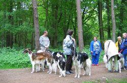 Dog's Paradise Inn - Club belge du Borzoï